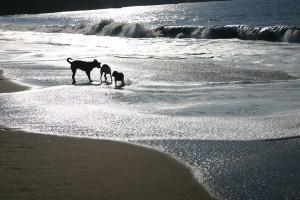 Urlaub mit Hund an der Nordsee, Ostsee und in Bayern