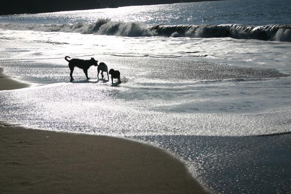 Winter mit Hund an der Nordsee